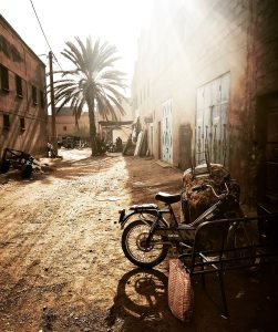 palms and moped against the light in a village