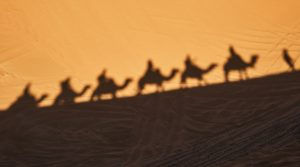 camels in a row comes as a shadow