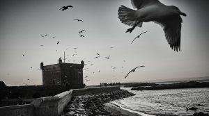 coast of Essaouira with seagulls